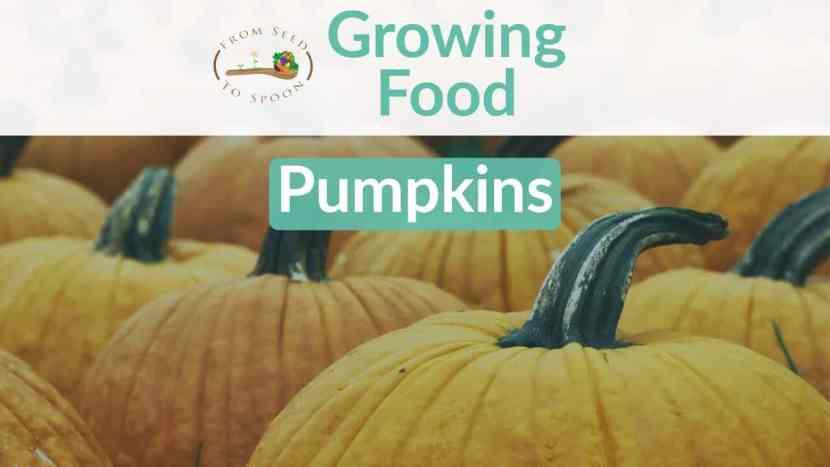 Pumpkin blog post
