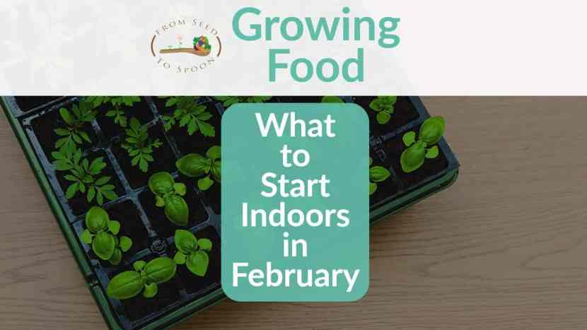 Seed Starting February