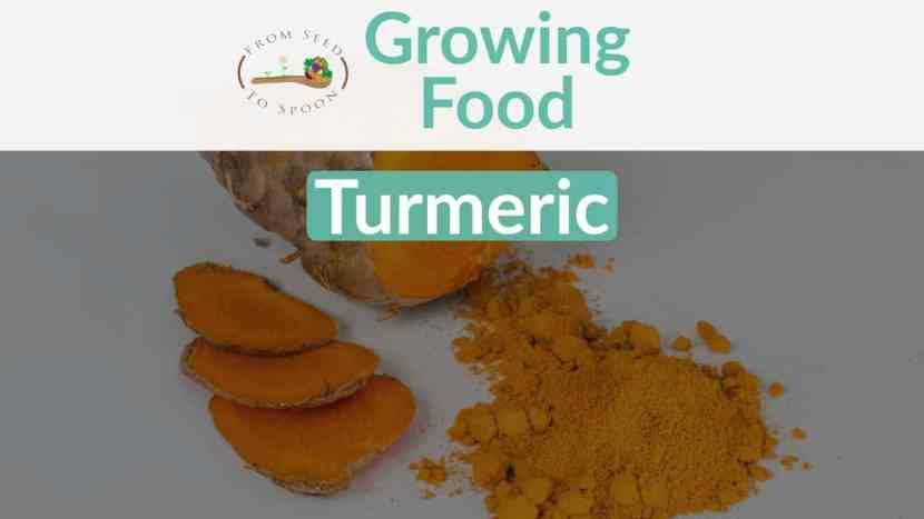 Turmeric blog post