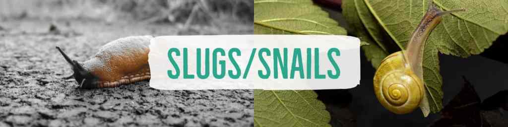 slugssnails-header
