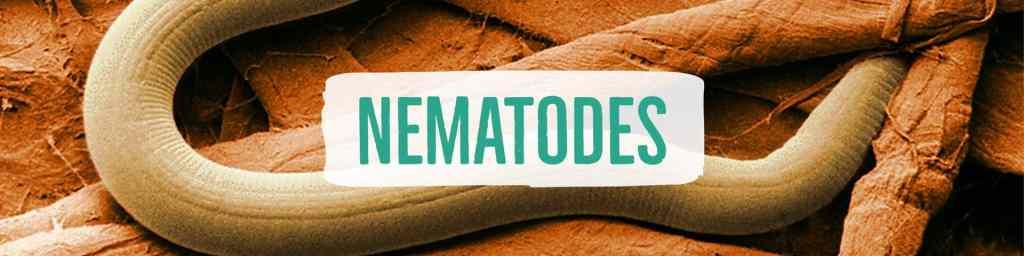 nematodes-header