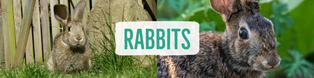rabbits-header