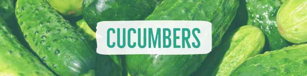 cucumbers-header