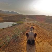 "Riding Camels in Pushkar (A ""Desert"" Safari in India)"