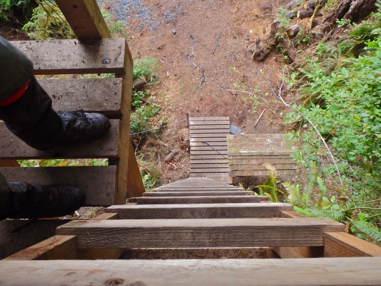 Hiking the West Coast Trail ladders