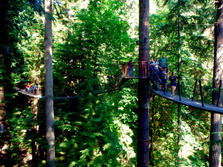 Capilano Suspension Bridge Park best gems in vancouver what is best to see in Vancouver