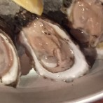More fresh oysters!