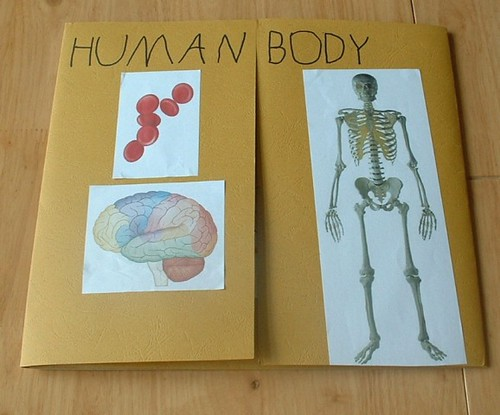 A Human Body picture down on a page