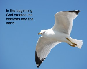 God created 1