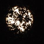Moon 6
