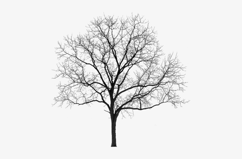 Tubes Arbres Arbustes Feuillages Winter Tree Silhouette Png Png Image Transparent Png Free Download On Seekpng