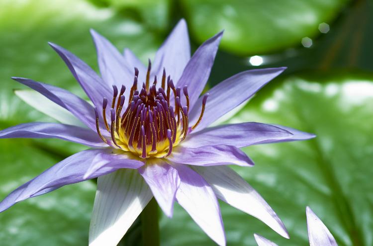 https://i2.wp.com/www.seenobjects.org/images/mediumlarge/2005-01-21-water-lilies-1.jpg
