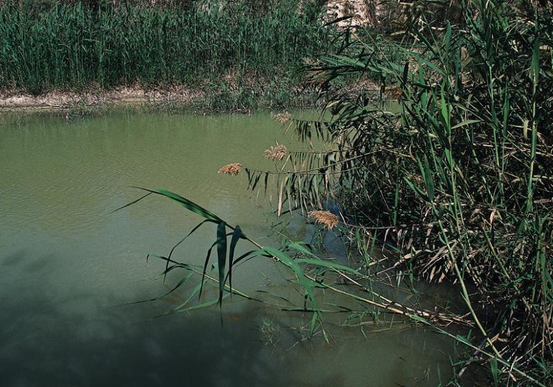 Image result for Jordan River Reeds
