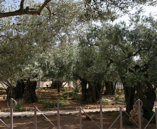 Gethsemane Design