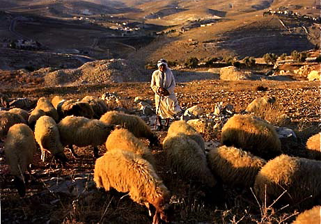 Image result for Bethlehem shepherds and sheep
