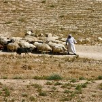 Shepherds' Field