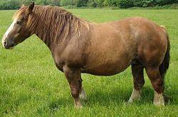 cavallo-da-tiro-pesante-rapido-e853feae