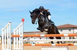 horse-721136_960_720-4160cbd6-1