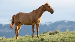 horses-1149974_1280-68b08410