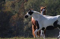 horses-314520_640-51d8ac69