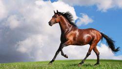 cavallo_jpg-cb3889f6