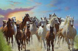freehorses-93046add