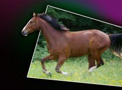 galloping-horse-94705_640-a419e1d3