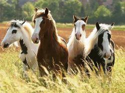 horses-d44ec160-2