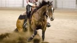 reining-54aa59c4