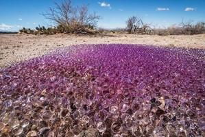 Nel deserto dell'Arizona trovate strane sfere gelatinose