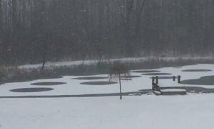 New York: misteriosi cerchi appaiono su un lago