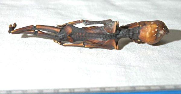 L'umanoide di Atacama ha il DNA umano