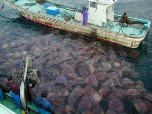 Meduse killer assediano le spiagge della Thailandia