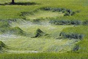 Misteriosi cerchi apparsi in un campo di mais in Francia