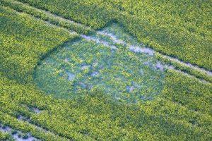 Crop Circle: un nuovo pittogramma compare a Cherhill, Wiltshire