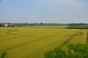 Ravenna: un cerchio nel grano compare a Barbiano di Lugo