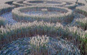 Compare un Crop Circle a Rue Lenoir, Belgio