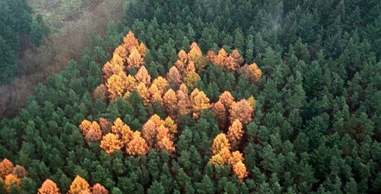 Foresta a forma di svastica che appare in Germania