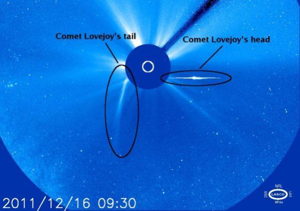 Lovejoy la nuova cometa di Natale