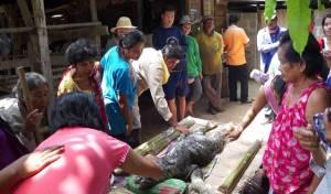 Strana creatura ibrida scoperta in Thailandia