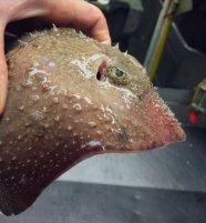 Pescatore Russo pubblica scatti di strane creature degli abissi 10