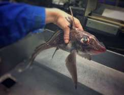 Pescatore Russo pubblica scatti di strane creature degli abissi 15