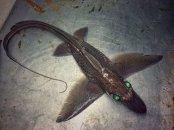 Pescatore Russo pubblica scatti di strane creature degli abissi 16