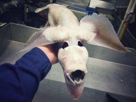 Pescatore Russo pubblica scatti di strane creature degli abissi 22