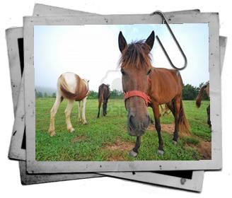 medicina caballos