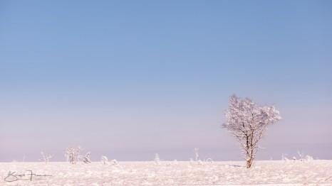 (c)-2017-Birgit-Franik-20141214-8973