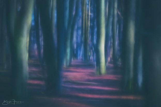 Wischer im Wald