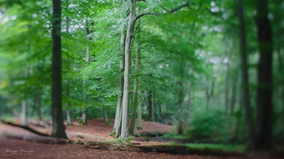 Waldbild erstellt mit der Flekto-Squeezerlens