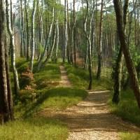 Weg im Wald (Symbolbild)