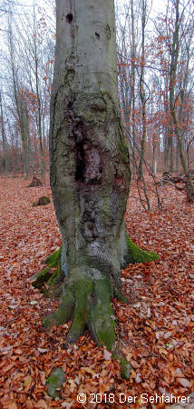 Baum im Hochformat